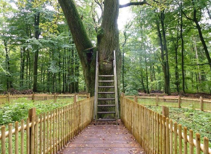Легендарный романтичный дуб