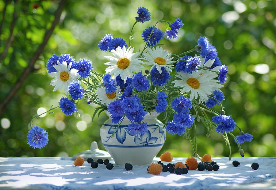 Картинки полевые цветы с днем рождения