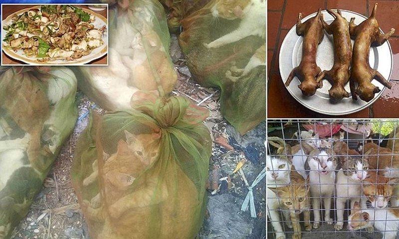 Расфасованы и готовы к кипятку: вьетнамский рынок кошачьего мяса