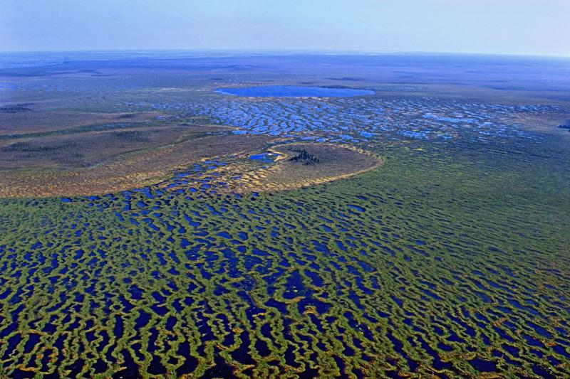 4. Васюганские болота природа, россия, чудеса