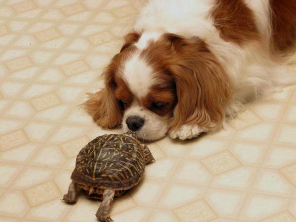 Домашние животные и энергетика квартиры. Внимание: люди без сердца!