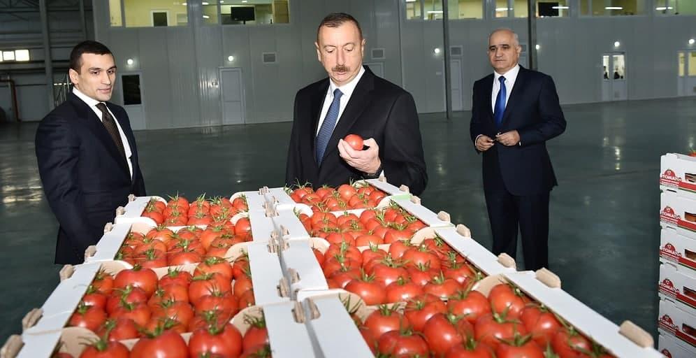 Плодожорка против дронов Азербайджан,алиев,политика,Россия,Томаты