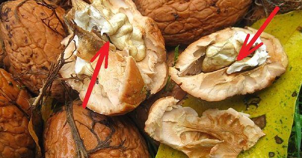 Что можно приготовить из грецких орехов