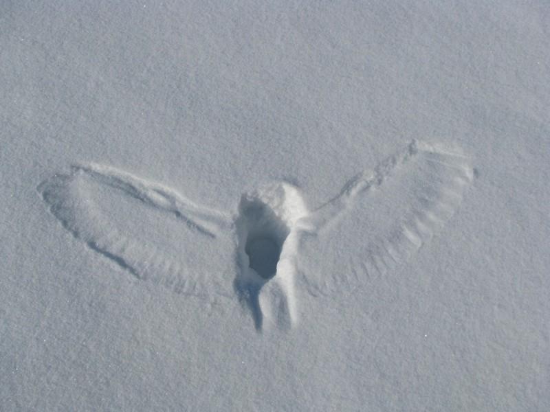 7. Совы: ангелы смерти животные, природа, ужас