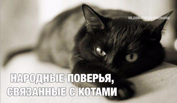 Народные поверья, связанные с котами: