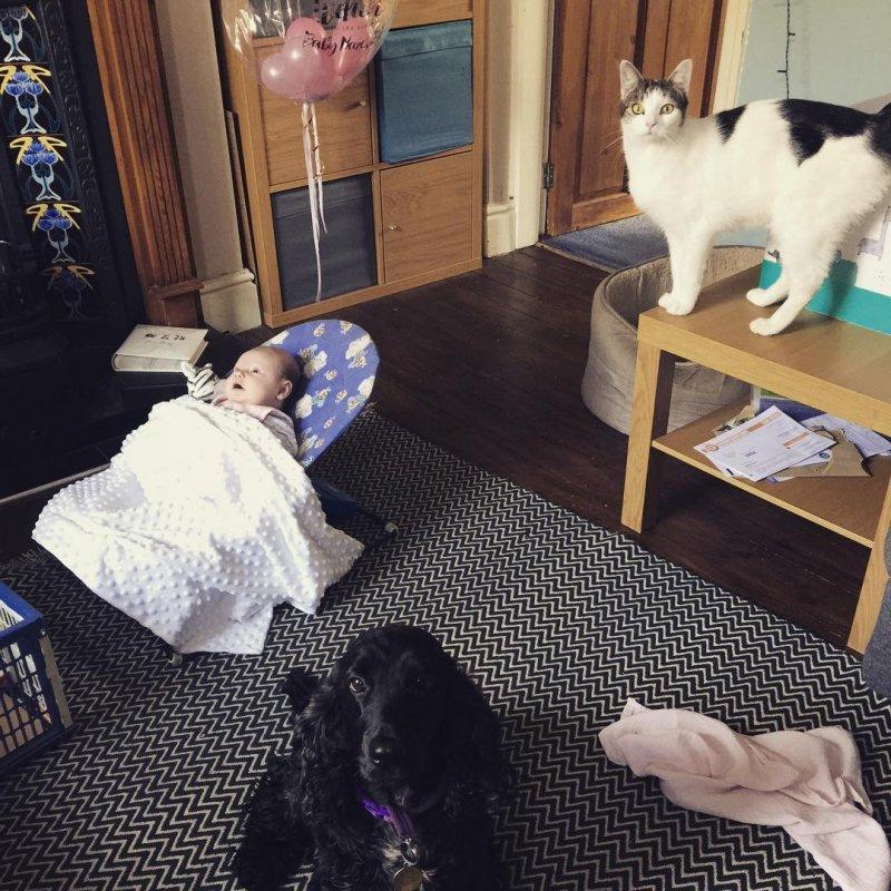7. Два охранника животные, животные и дети, кошки, питомцы, собаки, фото
