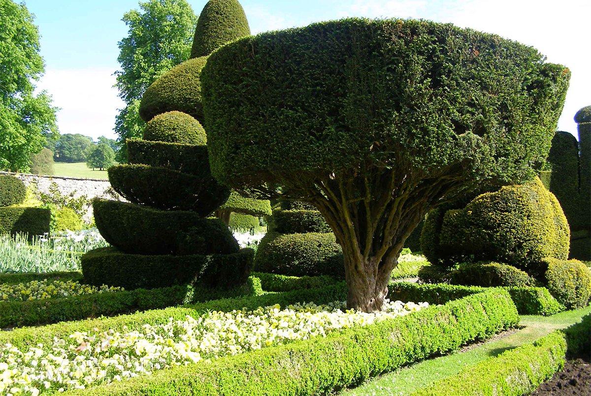 Стрижка растений в саду фото дом