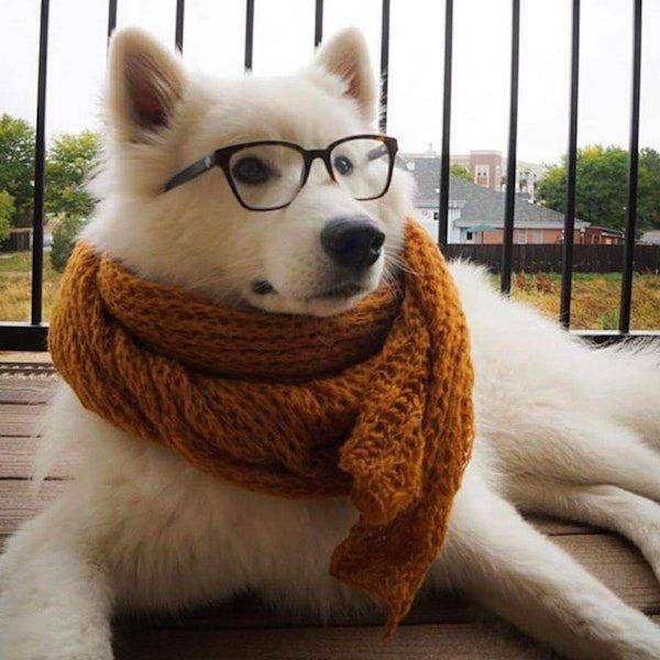 Любимая, смешные картинки шарф