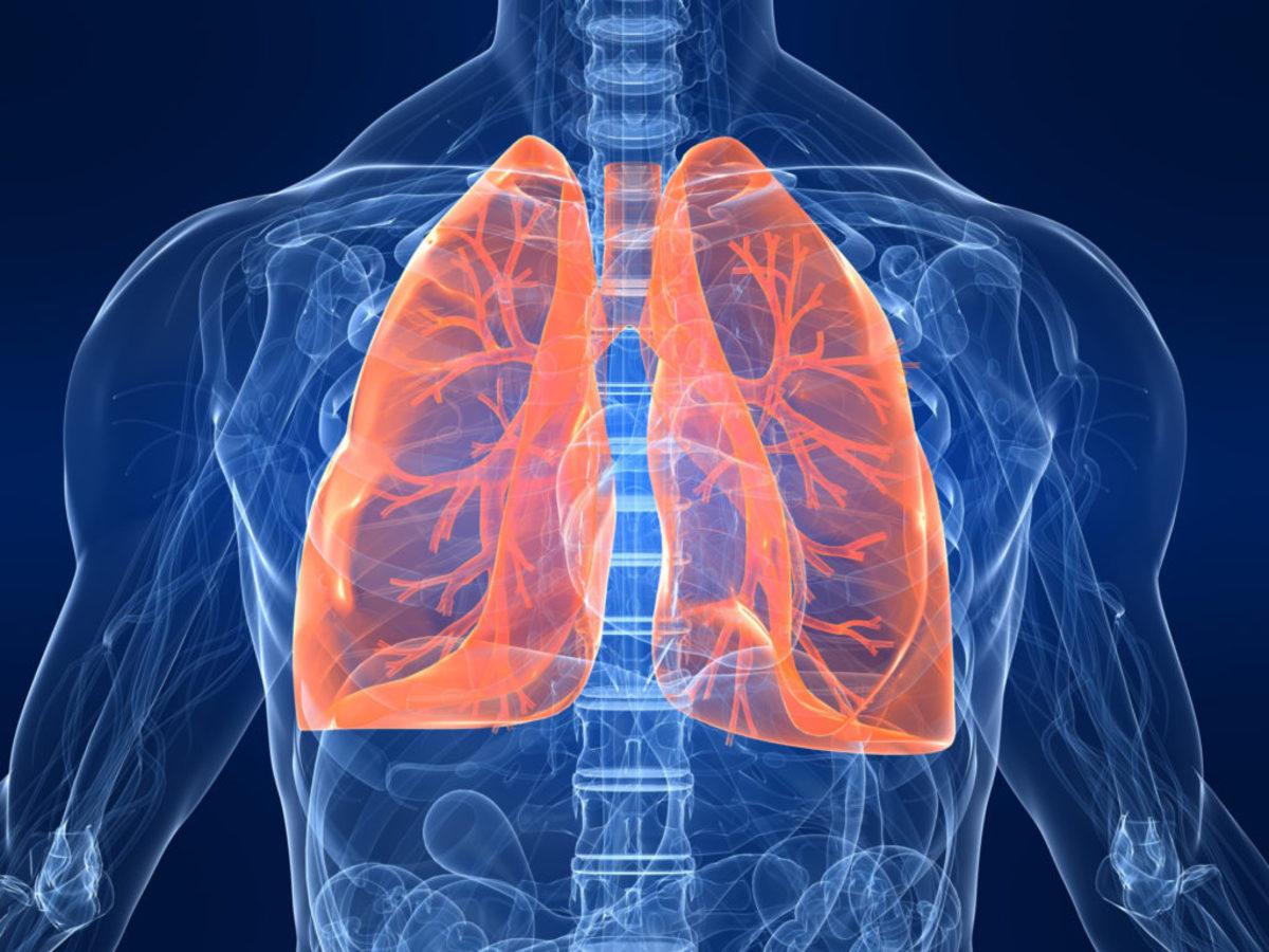 Впервые удалось вырастить дышащие легкие вне тела человека