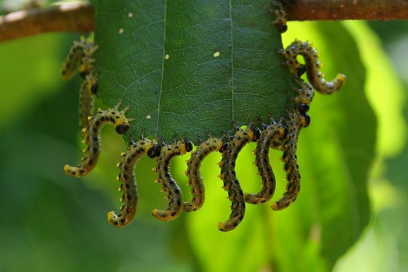 Вкусный листок