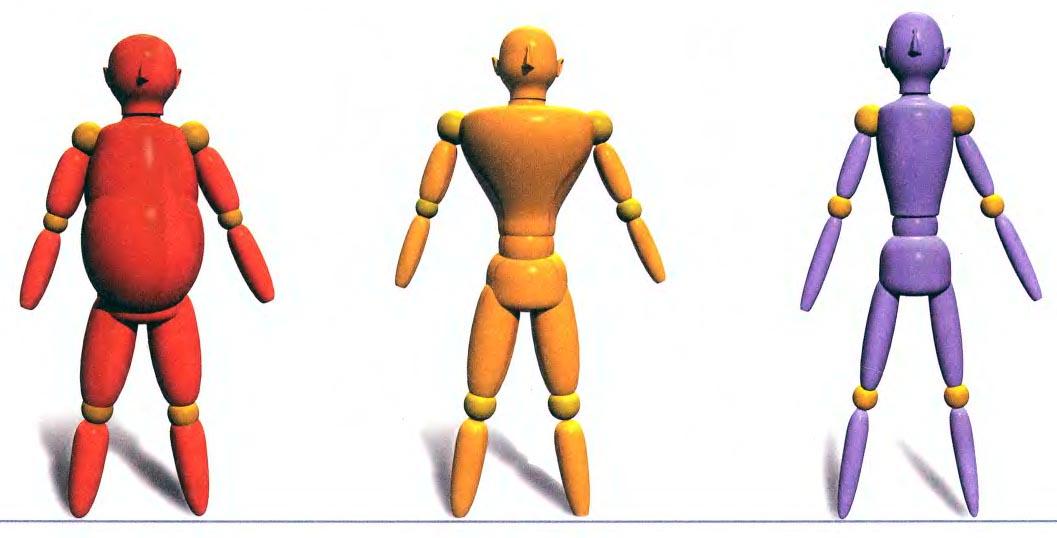Тип тела и мышления. Классификация фигур Шелдона