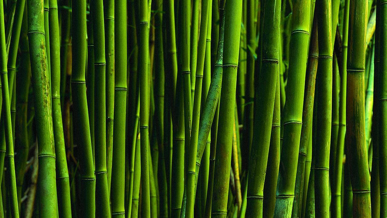 Интересные факты про бамбук