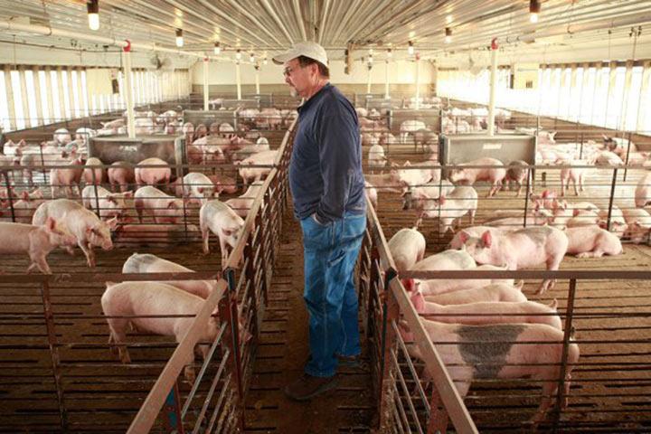 Как отучили проверяющего хамить работникам фермы