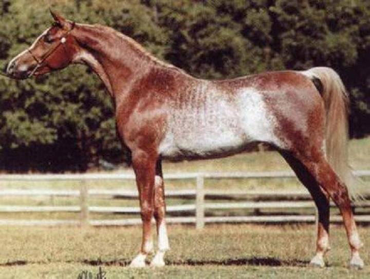 От красоты и величия этих лошадей перехватывает дыхание!