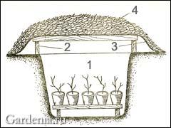 Хранение растений зимой в садовом прикопе
