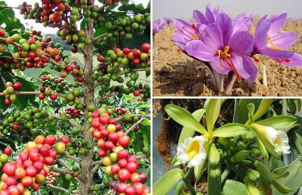 Как, на самом деле, растут эти фрукты, овощи и специи