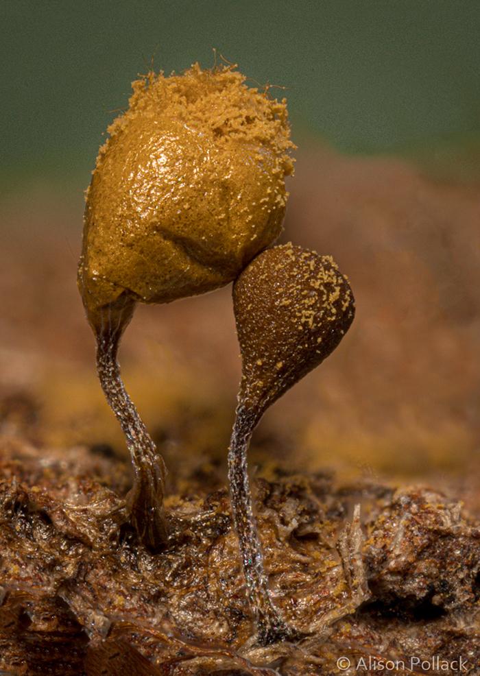 Экстремальные макро-фотографии грибов