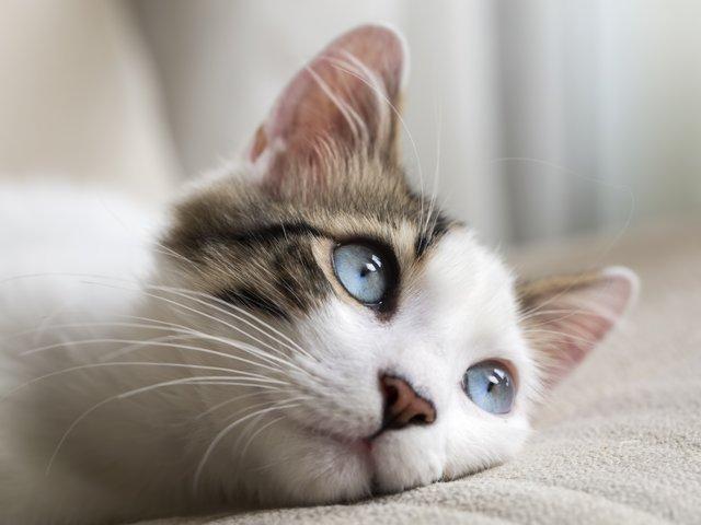 Как глаза кошки видят мир по сравнению с человеческими