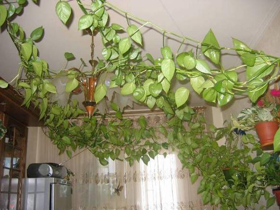 оладушки в духовке из кабачков рецепт пошагово