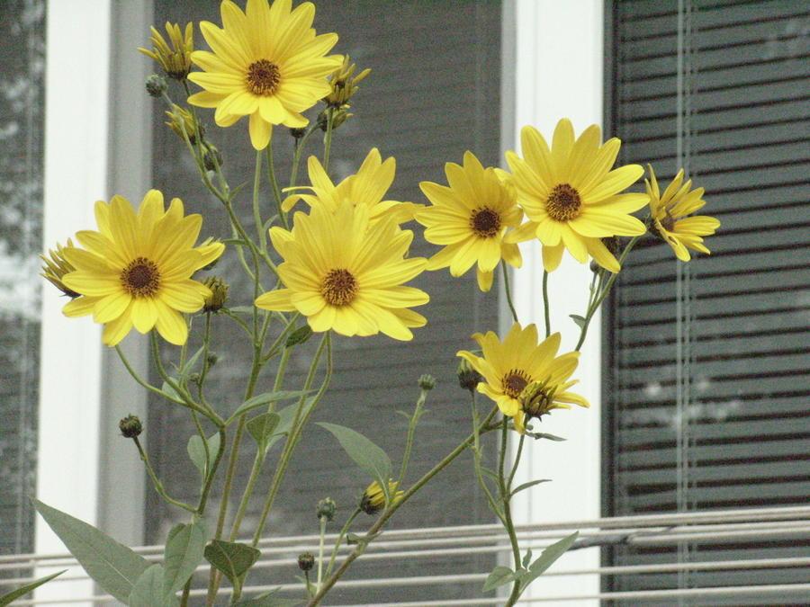 10 растений, цветущих в октябре дача,сад и огород,цветоводство