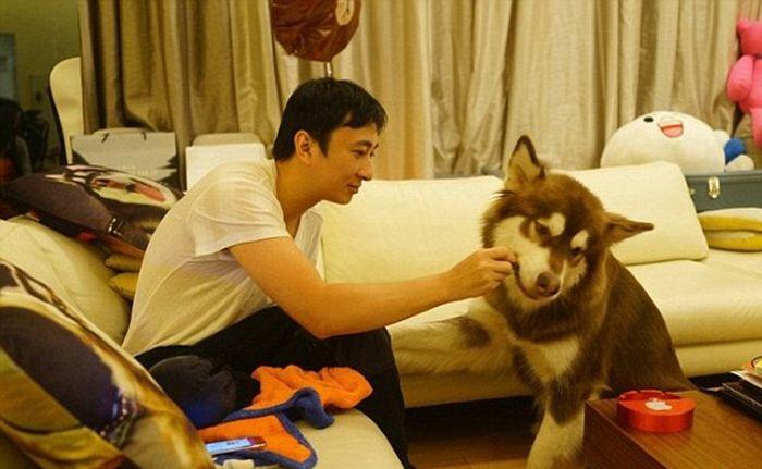 Сын китайского миллиардера подарил своей собаке 8 смартфонов iPhone 7 (3 фото)