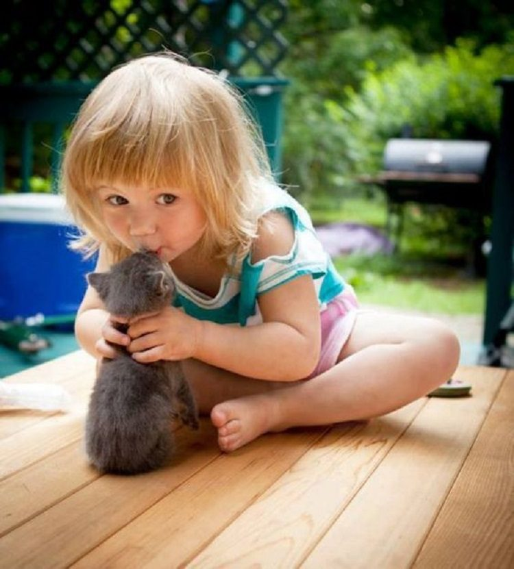 Смешные животные фото для детей