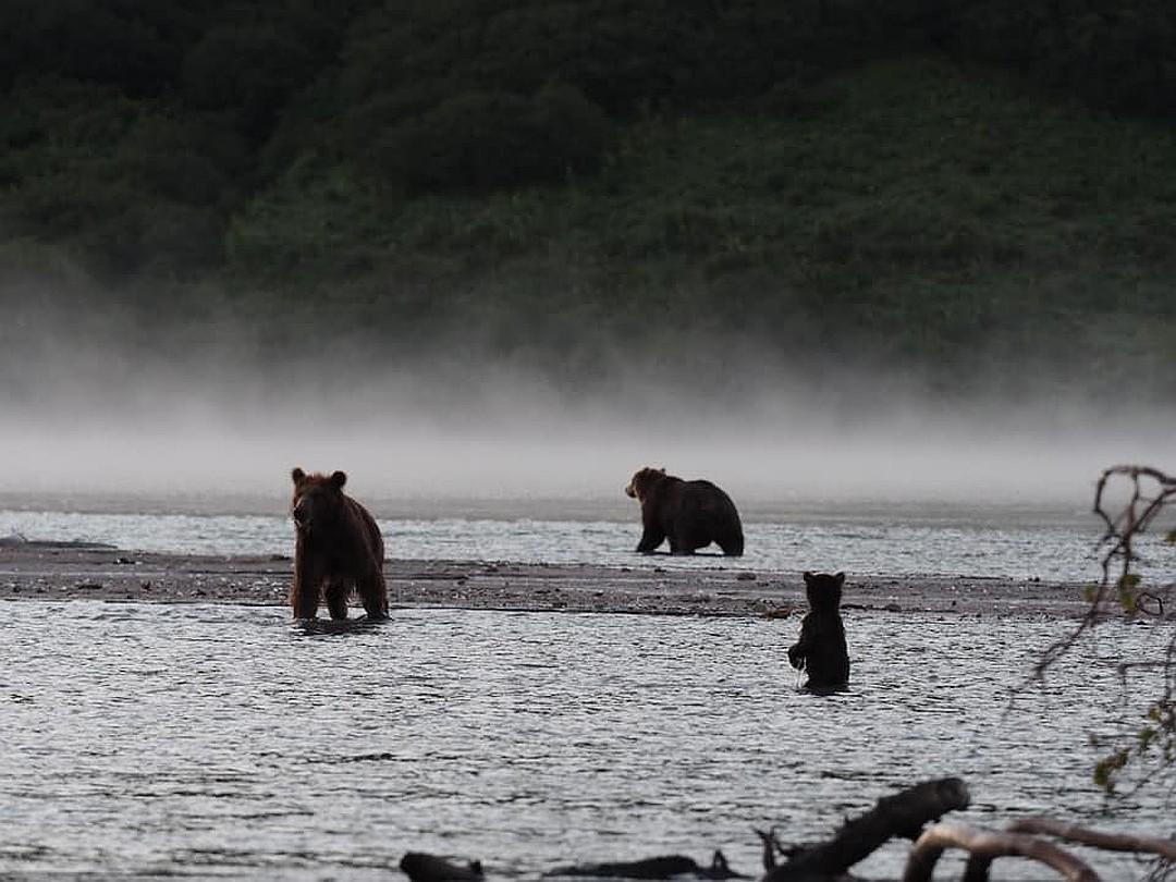Для того, чтобы спасти себя и свое потомство, медведица сбежала вместе с двумя детенышами, бросив около реки самого маленького - Кнопку. ФОТО: Владимир Омелин.