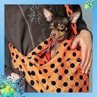Сумки-переноски для животных своими руками выкройка,шитье