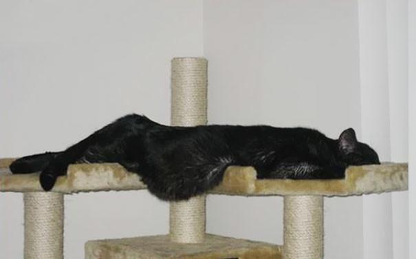 Кошки в деле расслабления - на высоте! животные, расслабленность, смешно, фото