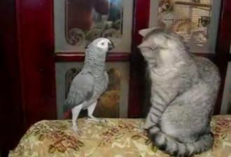 Попугай заговорил по-кошачьи, чтобы стать «своим» в квартире