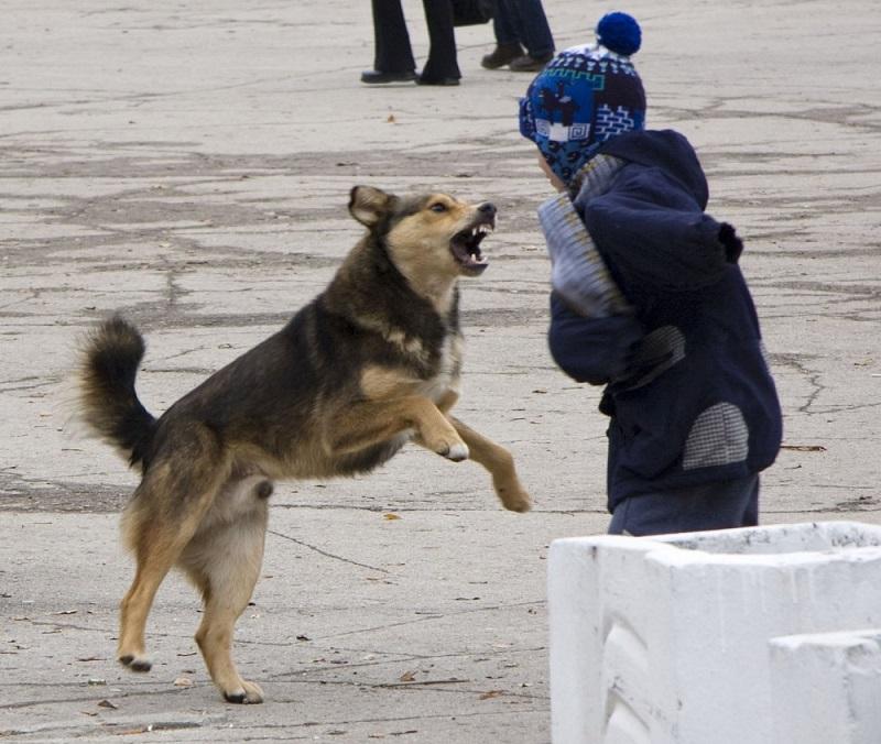 если напали собаки