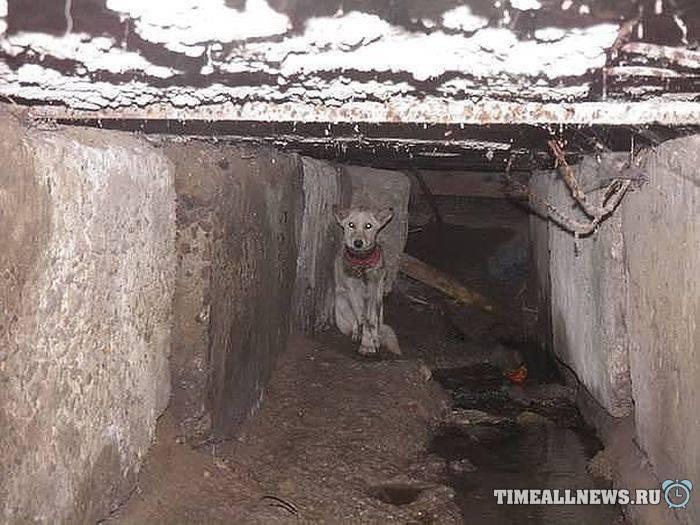 Спасли собаку по кличке Баночка
