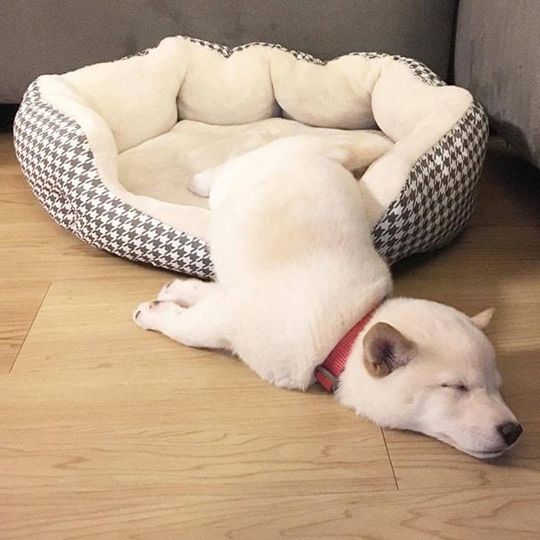Собачий релакс животные, расслабленность, смешно, фото