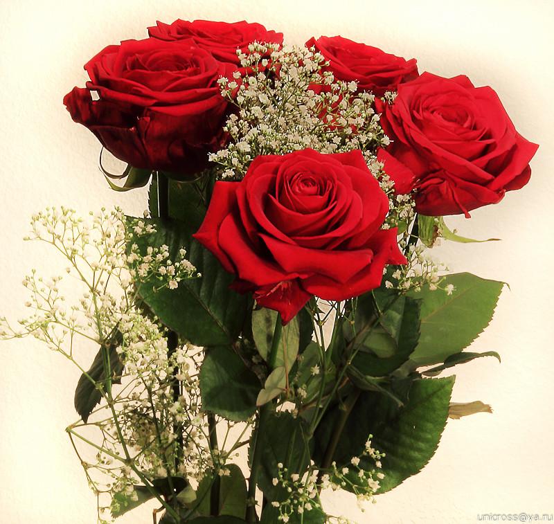 Красивые картинки с цветами подруге, день