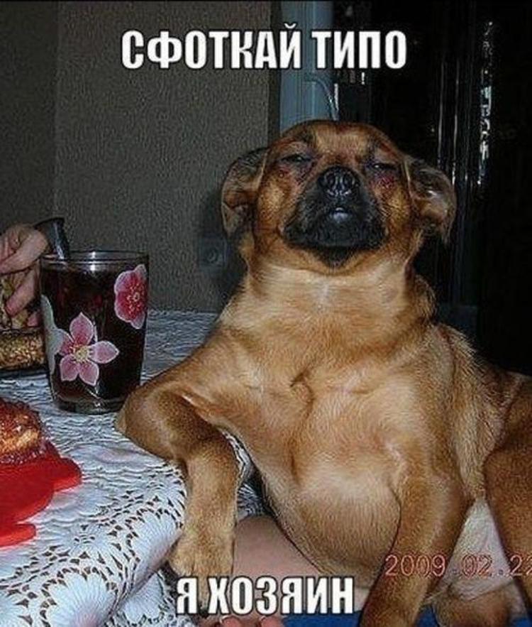 Контакте, смешные картинки с собаками с надписью