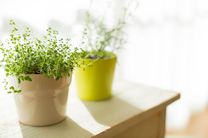 САД, ЦВЕТНИК И ОГОРОД. Уход за комнатными растениями в зимний период