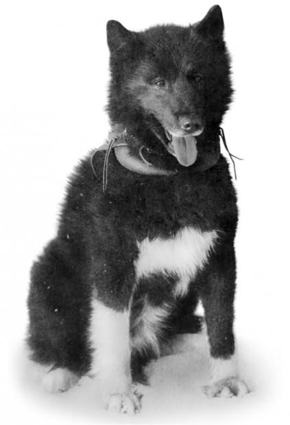 Животные знаменитости. Часть 4. Собаки-герои