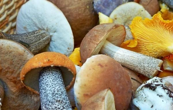 Почему народы севера не употребляют в пищу грибы? еда,интересное,народы,традиции