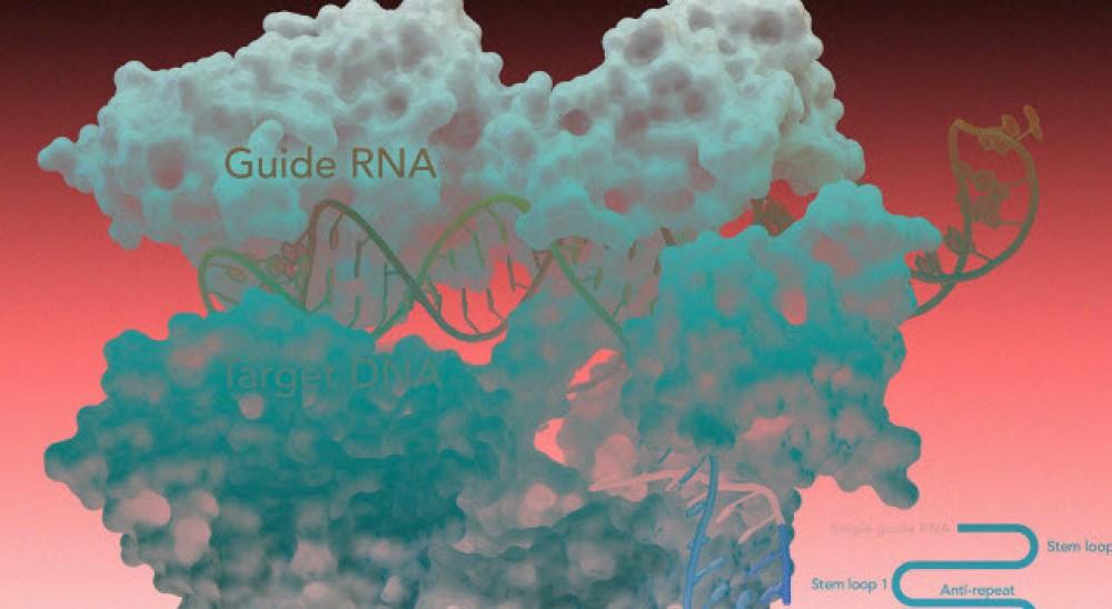 Чего ждать миру от появления генно-модифицированных людей?