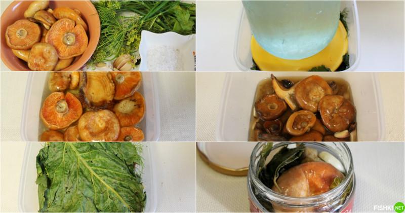 Заготовка рыжиков на зиму рецепты с фото