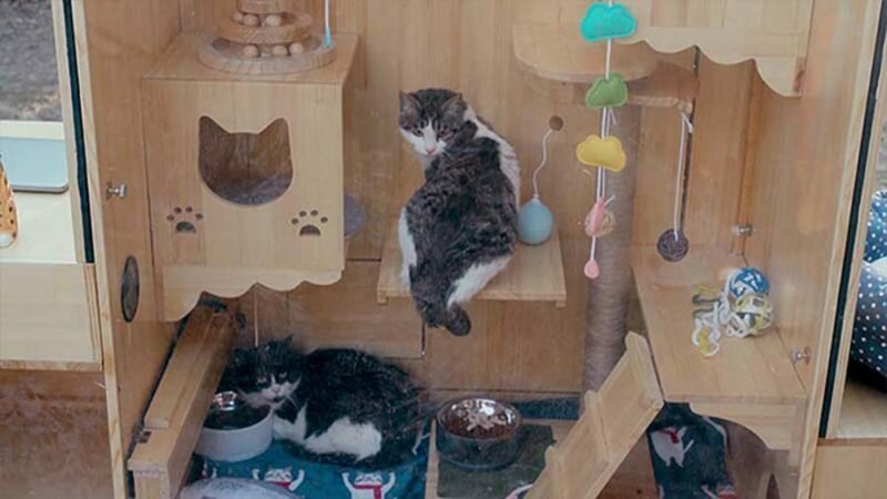 Обитатели приюта обеспечиваются не только едой и водой, но и игрушками добро, дом, животные, забота, кошки, милота, приют, система распознавания лиц