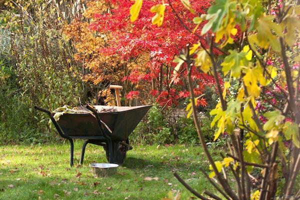 Сезонные работы на винограднике в октябре