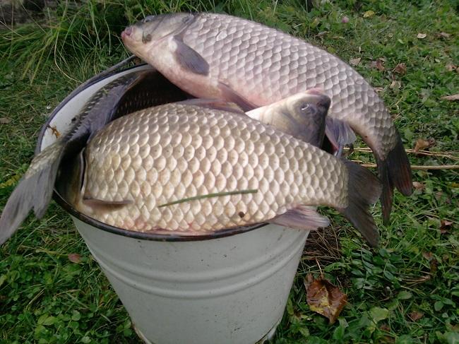 Убойная перловка для рыбалки. Рецепт бывалого рыболова