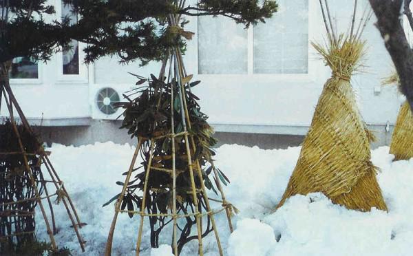 Как утеплить деревья на зиму
