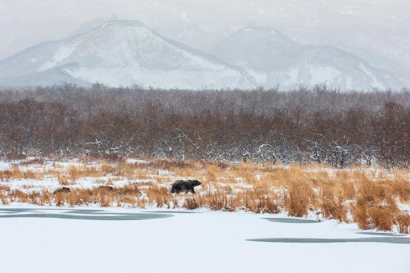 Дикая природа России природа