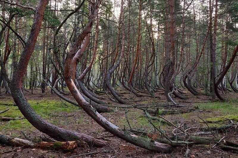 Пьяный Лес - аномалия в Рязанской области аномалии, аномальная зона, места, россия, факты