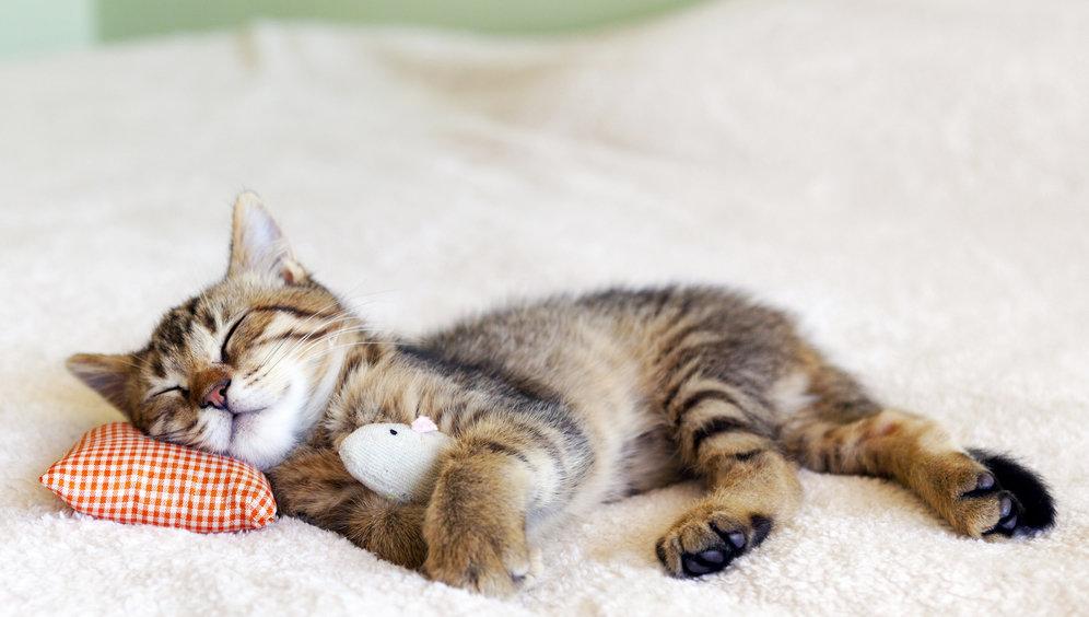 Спи в картинках