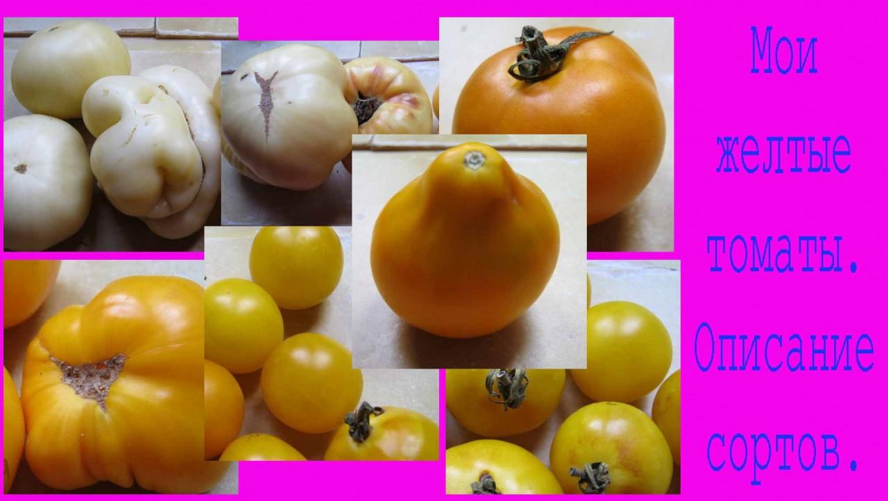 Мои любимые желтые томаты. Описание сортов. Подробнее смотрите видео здесь