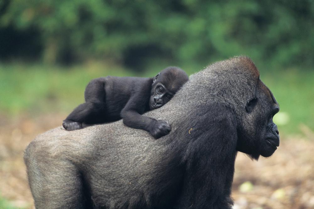 Дикая природа Африки - Фототур по Африке: от Ливии до Намибии