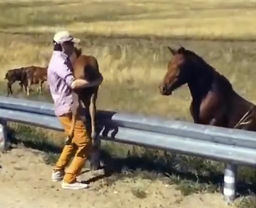 Мужчина вернул жеребенка маме. Реакция лошади растопила его сердце!